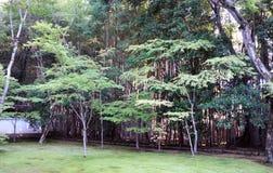 Giardino giapponese nel tempio Fotografia Stock Libera da Diritti