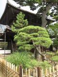 Giardino giapponese tradizionale del tempio Fotografie Stock