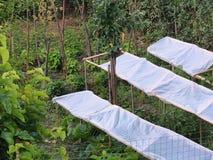 Giardino greco del villaggio Immagine Stock