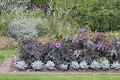 Giardino inglese Colourful del cottage con le erbe alte Immagine Stock