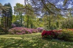 Giardino inglese singolare del cottage in primavera con vari piante e fiori fotografia stock libera da diritti