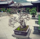 Giardino lian di Hong Kong Nan dei vecchi bonsai Immagini Stock Libere da Diritti