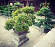 Giardino lian di Hong Kong Nan di alcuni bonsai Immagini Stock