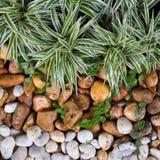Giardino minimo, piccolo giardino Fotografie Stock Libere da Diritti