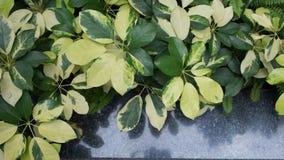 Giardino minimo, piccolo giardino Immagini Stock