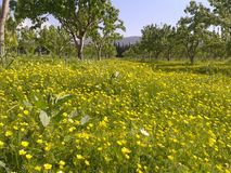 Giardino naturale Fotografia Stock Libera da Diritti