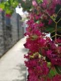 Giardino nella via Fotografie Stock