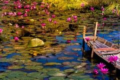 Giardino o campo felice del loto del fiore Fotografia Stock Libera da Diritti