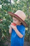 Giardino organico Fotografia Stock Libera da Diritti