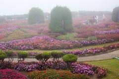 Giardino ornamentale reale tailandese Fotografie Stock Libere da Diritti