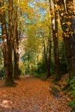 Giardino in parco nazionale di Peneda Geres fotografia stock libera da diritti