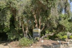 Giardino per i sensi nel giardino botanico della costa sud fotografie stock libere da diritti