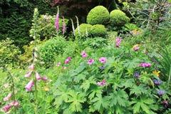 Giardino perenne nella primavera con la digitale di fioritura Fotografia Stock Libera da Diritti