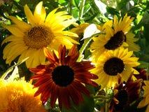 Giardino pieno di sole Immagini Stock