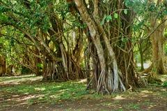 Giardino pittoresco di Pamplemousse in Mauritius Republic Fotografie Stock Libere da Diritti