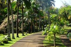 Giardino pittoresco di Pamplemousse in Mauritius Republic Fotografia Stock Libera da Diritti