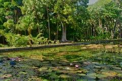 Giardino pittoresco di Pamplemousse in Mauritius Republic Fotografia Stock