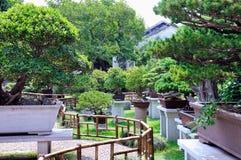 Giardino prolungato dei bonsai del giardino fotografia stock libera da diritti