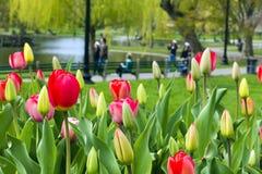 Giardino pubblico di Boston Immagine Stock