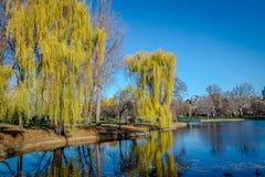 Giardino pubblico di Boston - Boston, Massachusetts, U.S.A. immagine stock libera da diritti