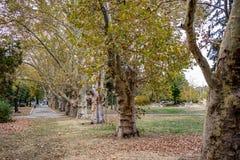 Giardino quasi vuoto a Sofia del centro, Bulgaria fotografie stock