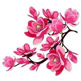 Giardino rosso del fiore della magnolia del ramo decorativo Vettore Illustratio royalty illustrazione gratis