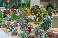 Giardino saggio del deserto dell'acqua succulente Fotografia Stock Libera da Diritti