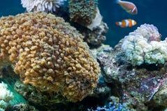 Giardino sotto il mare Fotografia Stock Libera da Diritti