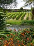 Giardino: stagno con le viti in giardino subtropicale immagine stock