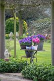 Giardino stile country rurale della molla con i fiori variopinti, cutted fotografia stock