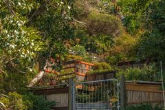 Giardino su un pendio molto ripido in Nuova Zelanda immagini stock libere da diritti