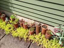 Giardino succulente Immagini Stock Libere da Diritti