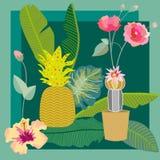 Giardino succulente tropicale Raccolta d'annata del tessuto Fotografia Stock