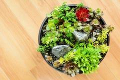 Giardino succulente in un vaso Immagini Stock