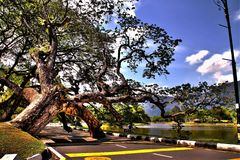 Giardino Taiping Malesia di vista del lago fotografie stock