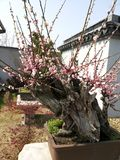Giardino tradizionale della Cina Suzhou Fotografia Stock Libera da Diritti
