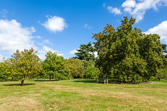 Giardino tranquillo verde fertile del terreno boscoso Fotografia Stock