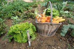 Giardino-Tre della cucina Fotografia Stock Libera da Diritti