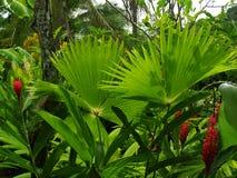 Giardino tropicale Fotografie Stock Libere da Diritti
