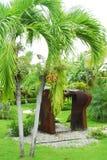 Giardino tropicale Immagini Stock Libere da Diritti