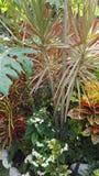 Giardino tropicale Immagini Stock