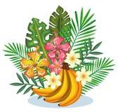Giardino tropicale con il mazzo della banana Immagine Stock