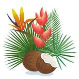 Giardino tropicale con la noce di cocco Fotografie Stock Libere da Diritti
