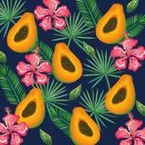 Giardino tropicale con la papaia Fotografie Stock