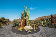 Giardino tropicale del cactus nel villaggio di Guatiza a Lanzarote, isole Canarie Fotografia Stock Libera da Diritti