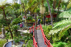 Giardino tropicale del palazzo di Monte Ponti rossi in giardino orientale Funchal, isola della Madera Immagini Stock