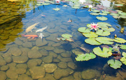 Giardino tropicale di zen Fotografia Stock Libera da Diritti