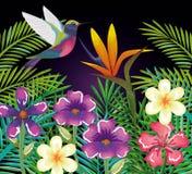 Giardino tropicale ed esotico con il colibrì Immagine Stock