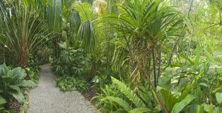 Giardino tropicale, Malesia Fotografia Stock Libera da Diritti