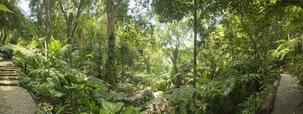 Giardino tropicale, Malesia Fotografie Stock